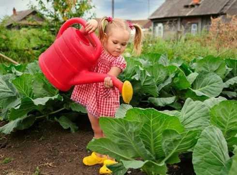 девочка поливает капусту
