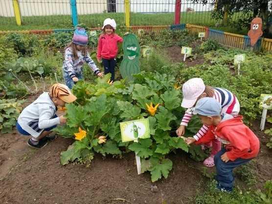 дети изучают огурцы